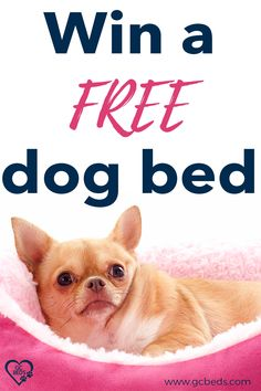 Learn what all goes into a good dog bed in order to combine comfort and value (and avoid probmls with smells or even sickness) and enter the context to win one for free Cute Dog Beds, Pet Beds, Cute Dogs, Cute Babies, Large Animals, Cute Baby Animals, Largest Great Dane, Personalized Dog Beds, Indestructable Dog Bed