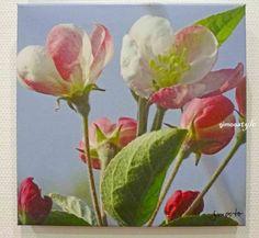 Apfelblüte, Baumblüte, FOTO von GIMOOTO, Motiv gedruckt auf Satin Canvas Leinwans
