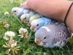 Animals And Pets, Baby Animals, Funny Animals, Cute Animals, Funny Birds, Cute Birds, Beautiful Birds, Animals Beautiful, Funny Parrots