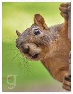 Portrait Details about  /Squirrel-care Sticker