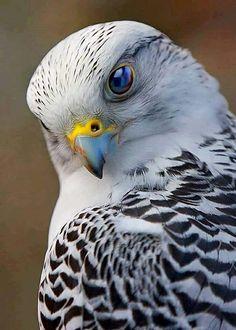 Bird Of Prey Photography Raptors Ideas Pretty Birds, Love Birds, Beautiful Birds, Animals Beautiful, Nature Animals, Animals And Pets, Cute Animals, Wildlife Nature, Exotic Birds