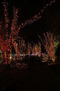 2014 Gardenfest of Lights at Lewis Ginter Botanical Gardens | Flickr ...