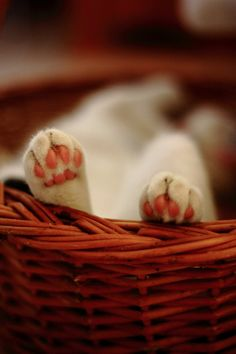 I Love kitty paw pads! I Love Cats, Cute Cats, Funny Cats, Adorable Kittens, Crazy Cat Lady, Crazy Cats, Cat Paws, Dog Cat, Cat Breeds List