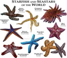 Starfish and Seastars of the World by rogerdhall