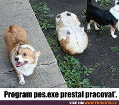 Program pes.exe přestal pracovat Funny Memes, Jokes, Programming, Corgi, Cute Animals, Humor, Ouat Funny Memes, Pretty Animals, Chistes
