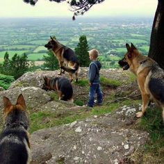 Best Guard dogs ever!!