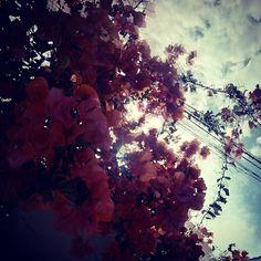 #santikarootsart #fotografía #agosto #cielos #flores