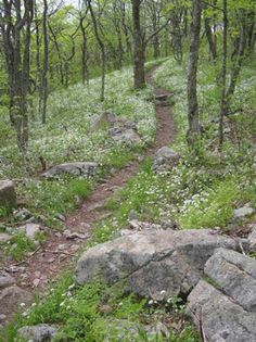 The Appalachian Trail on Whitetop Mountain. Photo by Kathryn Case, courtesy the Appalachian Trail Conservancy.