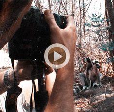 Vídeo 37 Madagascar – Rodeados de lemures catta en la Reserva de Anja
