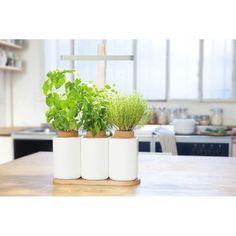 Potager d'intérieur Lilo - mini potager d'appartement Inside Garden, Planter Pots, House Design, Deco, Green, Plants, Top 80, Images, Emmanuel Macron