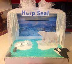 Hannah's diorama...harp seal