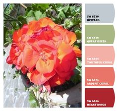 Why not bring the beauty of nature indoors with this @SherwinWilliams color palette inspired by the gorgeous coral tones in this flower?