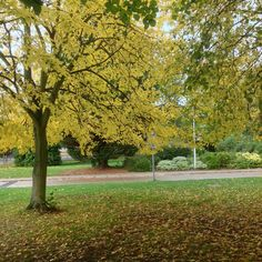 Autumn at Brunel University University, Country Roads, Colours, Autumn, Fall Season, Fall, Community College, Colleges