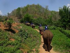 Elephant reserve in Thailand