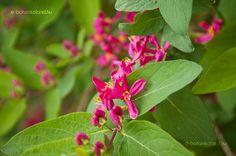 tatár lonc Flowers, Plants, Plant, Royal Icing Flowers, Flower, Florals, Floral, Planets, Blossoms