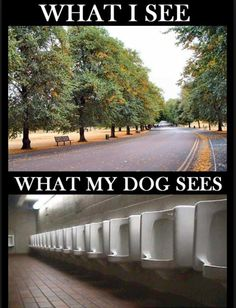 Click the link/image to see the full pic & story! http://giantgag.com/funny-memes/what-i-see-vs-what-my-dog-see?pid=2038