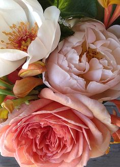 From our garden- Roses: Jacqueline du Pré (Harkness), Geoff Hamilton (very different color this year) and Abraham Darby (both David Austin). Language Of Flowers, Deco Floral, Flower Aesthetic, Floral Photography, Gras, Prints For Sale, Flower Art, Peony Flower, Floral Arrangements