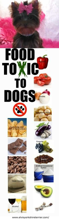 Foods Toxic To Dogs. I knew about the chocolate and the chicken bones but the rest are a shock to me.WOW