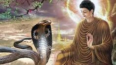 Image result for พระพุทธเจ้า