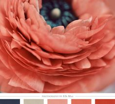 color inspiration: poppy pinks