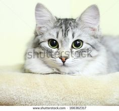 @Paige Quinn silver version - sold on @Shutterstock