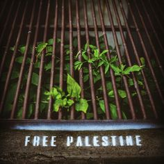 #freepalestine #freedom #justice #pain #innocence #palestine #freegaza #lionheart #streetart #stancils #art #streetart #painting #blackandwhite #fineart #artwork #creative #arte #portrait #details #feeling #naturepainting #spotlightonartist  #kunst #strassenkunst #modernekunst #spraypaint #urbanart igordobrowolski.com