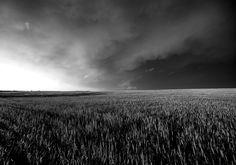 Thunderstorm over wheat field, near Great Bend, KS.
