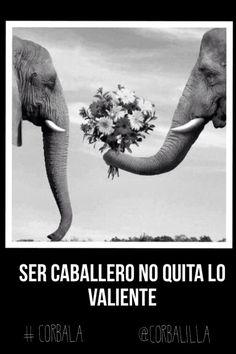 @corbalilla #corbala