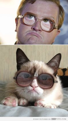 Look alike: Bubbles Grumpy cat - Funny grumpy cat wearing glasses looking like Bubbles from Trailer Park Boys -- a perfect doppelgänger.