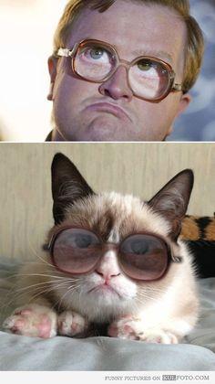 Look alike: Bubbles Grumpy cat --- a perfect doppelgänger.