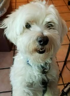 Adopt Wally On Pet Dogs Terrier Mix Dogs Terrier Mix