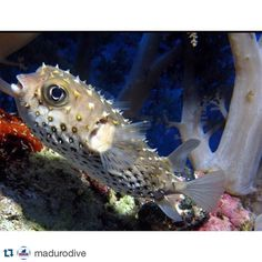 #sharemysea #Repost @madurodive  Monday blues face  Find your next scuba adventure at www.MaduroDive.com #padi #scubadiving #scuba #diving #scubadiver #diver #scubalife #deepblue #oceanlife #waterlife #instascuba #IgersScuba #Scubainstagram #Scubagram #Scubafamily #Scubalove #Scubadive #Scubatime #Scubafam #Scubaphoto #Scubafeed #ShareMySea