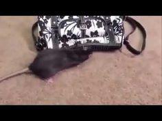 +27810648867,Spritual Rats for Money in Durban,Kokstad,Newcastle,Ladysmi...