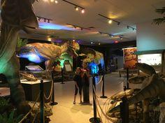 Exploring the S. FL Science Museum's Dinosaur exhibit