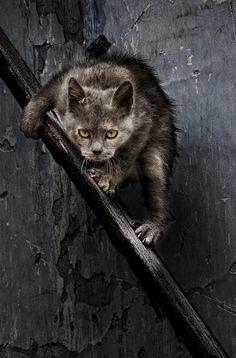 Diese einmaligen 26 Fotos sind der Beweis, dass Katzen verkleidete Aliens sein müssen.