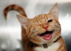 22 Happiest Animals EVER! We Dare You Not To Smile - brainjet.com