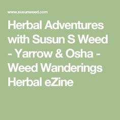 Herbal Adventures with Susun S Weed  - Yarrow & Osha - Weed Wanderings Herbal eZine