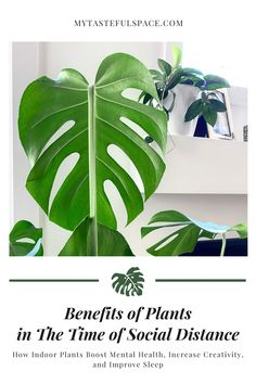 Indoor Plants have many mental and physical health benefits we can all take advantage of, while enhancing the look of our homes. #plantsbenefits #benefitsofplants #indoorplants #houseplants #bettersleep #airpurifyingplants #homedeecor