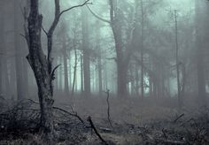 black and white, creepy, and dark image Into The Woods, Solas Dragon Age, Yennefer Of Vengerberg, Southern Gothic, Dark Forest, Magical Forest, Imagines, The Witcher, New Wave