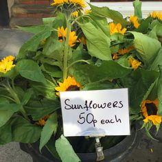 sunflowers at flower market stall Guildford Farmer's Market. Click through to discover more highlights from the market that you'll love