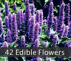 42 Flowers You Can Eat - SHTF, Emergency Preparedness, Survival Prepping, Homesteading