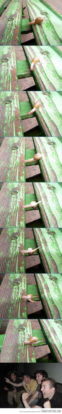 Snail Parkour - you know after he crossed, someone sat/stomped on it.  Or a bird swooped down and had it for lunch.  :(