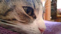 My cat 😍 #Raven 😍