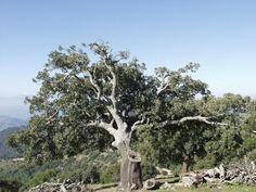 Arriba: En esta zona, además de pinos, se pueden ver alcornoques y encinas. Izquierda: Mirador de Pocopán. Derecha: Imagen desde el cerro de Pocopán.