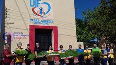 """El DIF Municipal de Casas Grandes recibió de las """"Paquimeitas"""" del Club de Leones Nuevo Casas Grandes, la cantidad de 6,000 plantas de hortalizas para..."""
