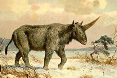 El unicornio que convivió con los humanos.- unicornio de siberia, por heinrich harde (bbc mundo).