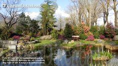 Kamelie Camellia 1_Infos_Kamelien Parkbank am Teich zwischen blühenden Kamelien und Schneeheide (Erica carnea). Im Kamelienpark Locarn...