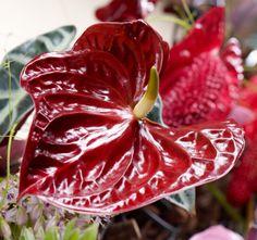 die 17 besten bilder von stylishe anthurien deko ideen floral arrangement floral design und. Black Bedroom Furniture Sets. Home Design Ideas