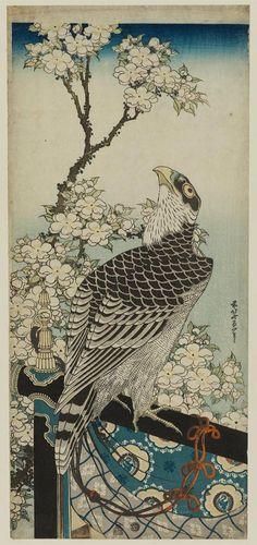 Katsushika Hokusai: Hawk and Cherry Blossoms - 1834