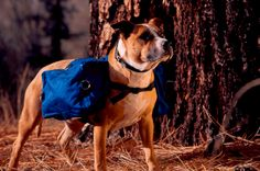 Cascade Pack | fidogear $24.95 #ShopSeattleDog Seattle Dog, Camping Stuff, Safety, Packing, Urban, Dogs, Security Guard, Bag Packaging, Doggies